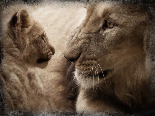 lion-567036_1280